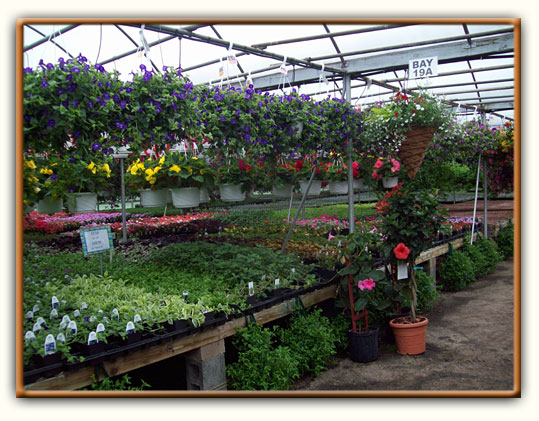 Cierech's Greenhouse - Pohatcong Growers-Cierech's Greenhouse - Pohatcong, NJ