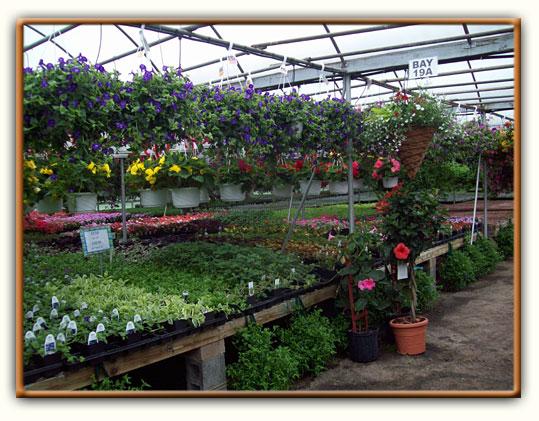 Cierech's Greenhouse - Pohatcong Growers-Cierech's Greenhouse - Pohatcong, NJ